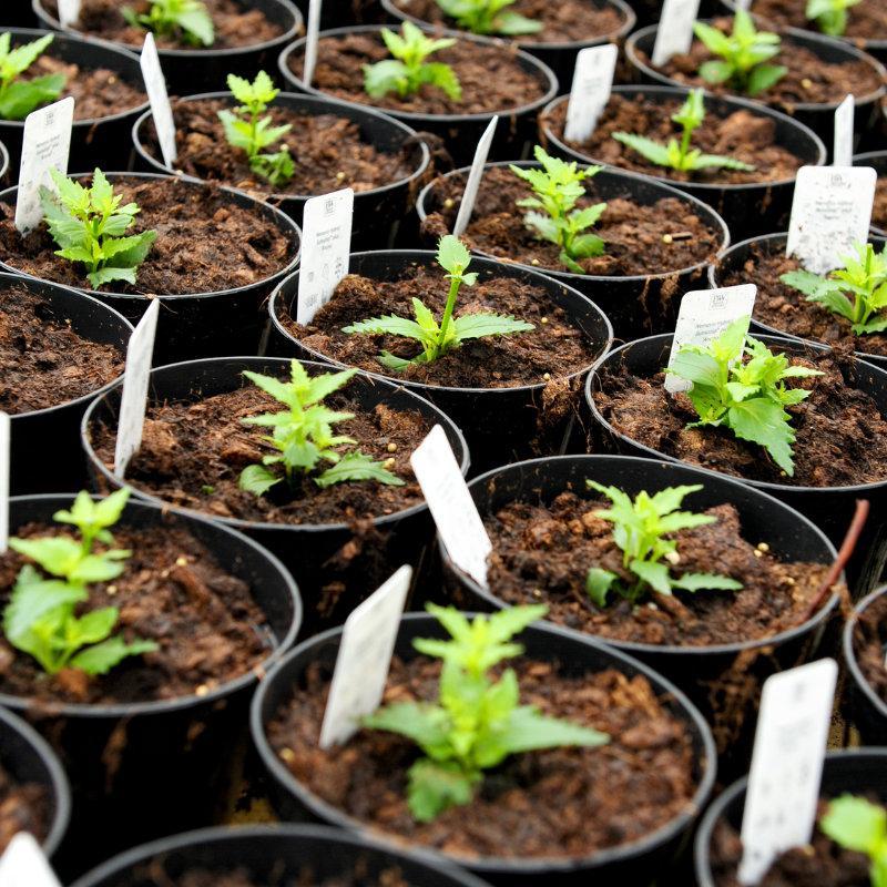 Etykiety ogrodnicze